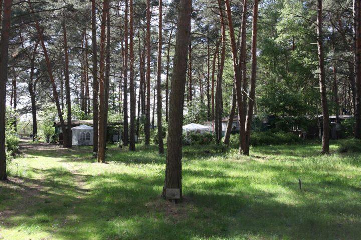 Stellplätze im Kiefernwald